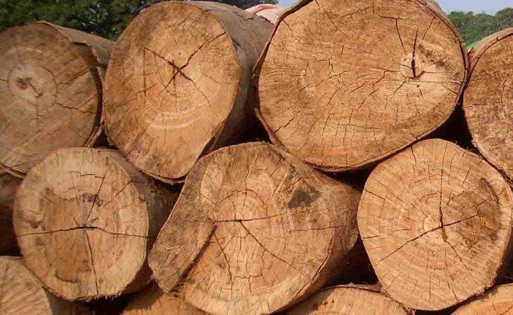 logs-african-hardwood